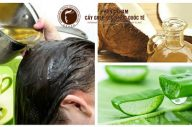 Cách trị rụng tóc từ nguyên liệu thiên nhiên